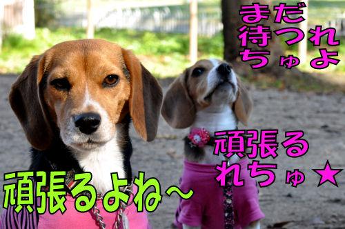 2011111806.jpg