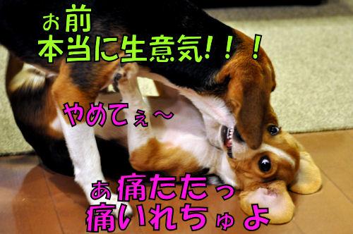 2011111901.jpg