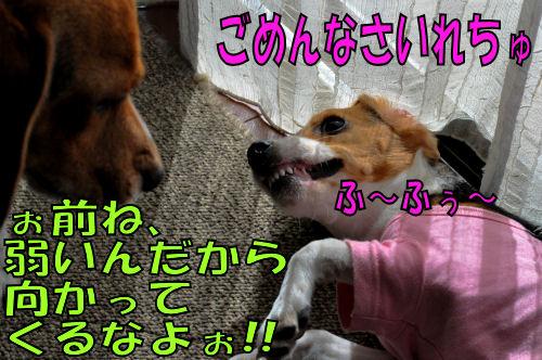 2011112203.jpg