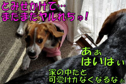 2011112204.jpg