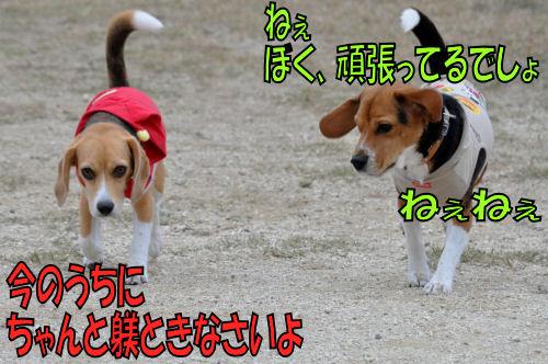 2011112904.jpg