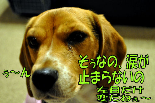 2011120102.jpg