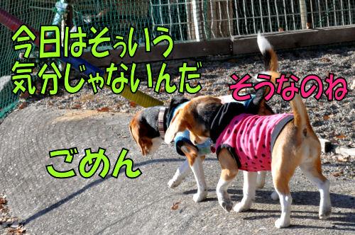 2011123103.jpg