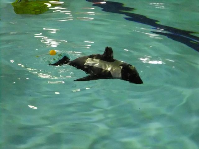 pict-orca.jpg