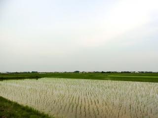 埼玉県羽生市 (5)