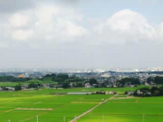 古代蓮の里(埼玉県行田市) (13)