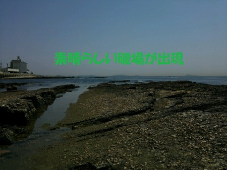 DSC_0184 (450x338)