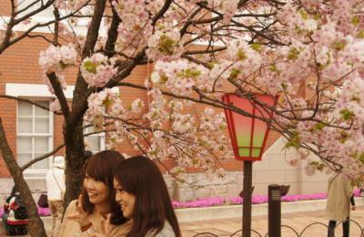 あ683簪桜