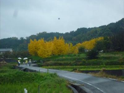 伊予路の秋