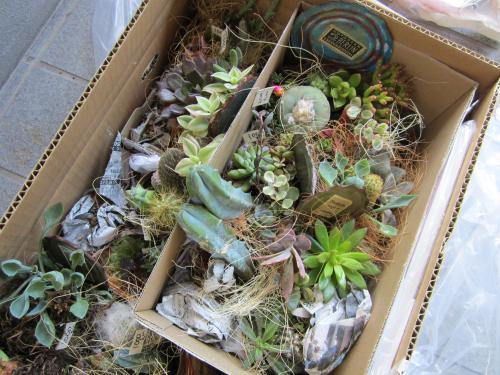 garden+002_convert_20111023235804.jpg