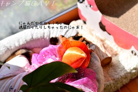 1410_8382.jpg