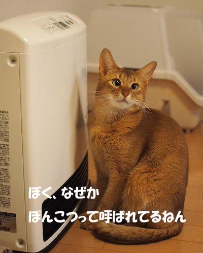 PC144215a.jpg