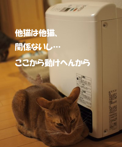 PC144216a.jpg