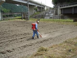 黒豆肥料散布