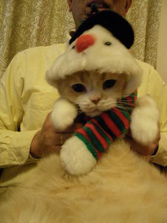 クリスマス、猫2