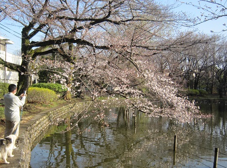 善福寺公園130319-1