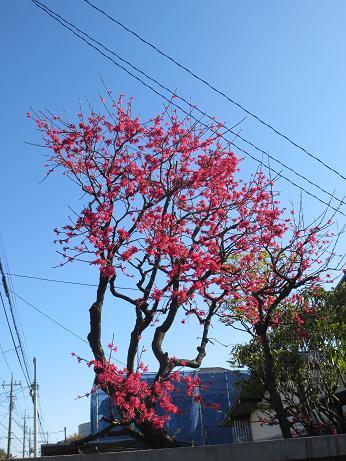 よく見る花