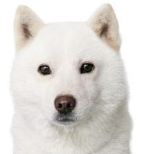 お父さん犬-0001