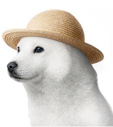 お父さん犬-0002