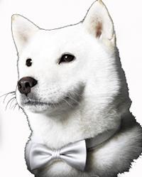お父さん犬-0007