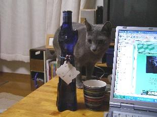 猫ワイン1