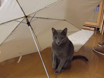 傘の中のルーク