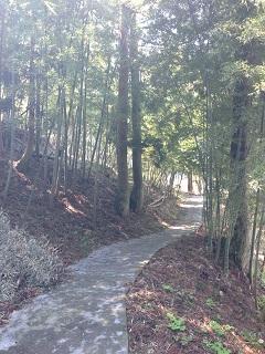 湯田川 梅林公園(2013) 4