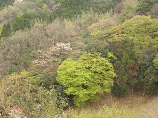2012 0416 新緑