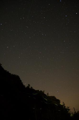 蛍と星と人工衛星 (撮影者:としあき)