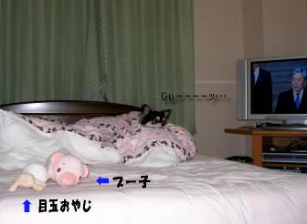 テレビ見てる