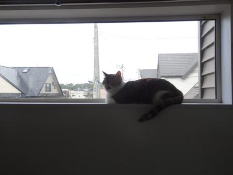 みんなの窓?01(2014.09.16)