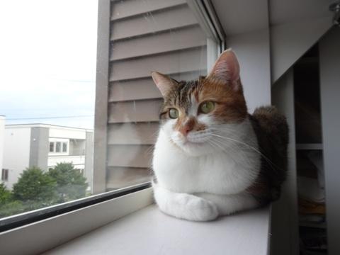 みんなの窓?02(2014.09.16)