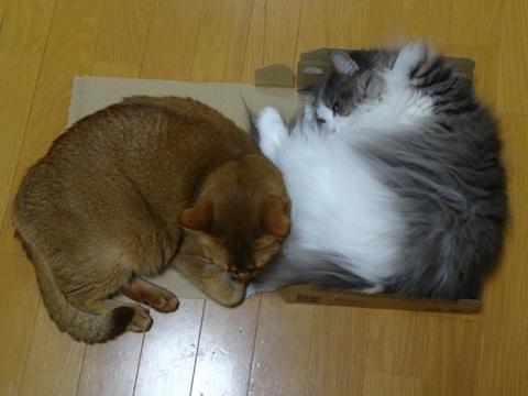 ジョゼフィン嬢お迎え記念日03(2014.10.15)