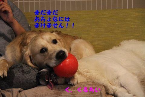 20110515_05_2R.jpg