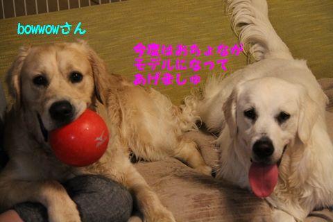 20110515_06_2R.jpg