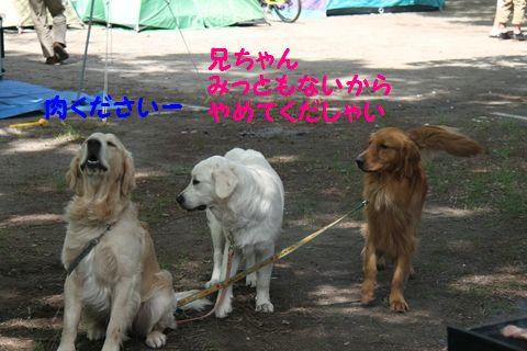 20110522_11_R.jpg