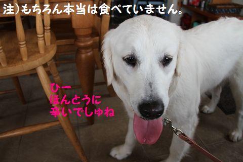 20110529_02_R.jpg