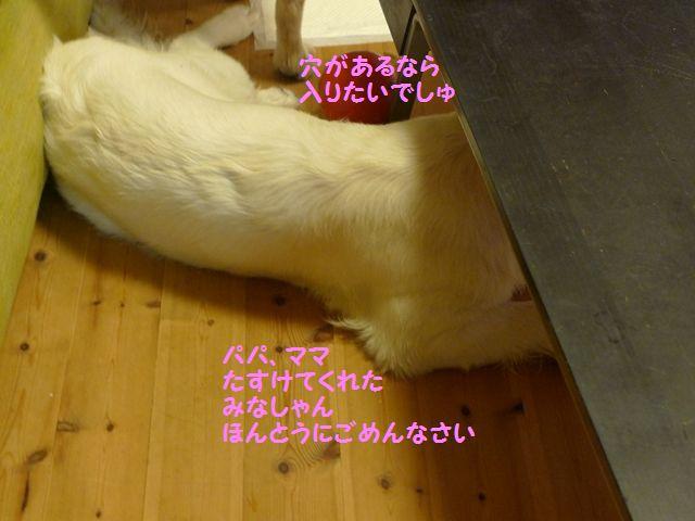 20110620_07_R.jpg