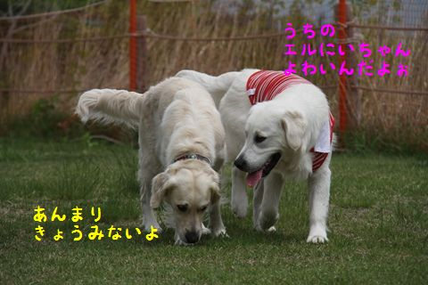 20110628_12_R.jpg