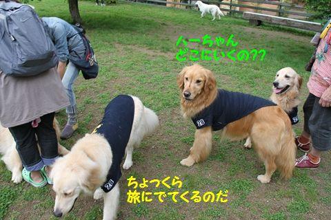 20110709_07_R.jpg