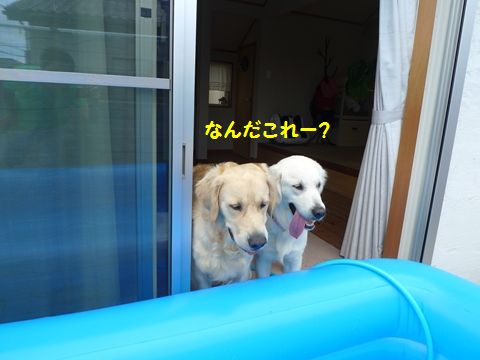 20110710-01_R.jpg