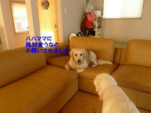 20110710-10_R.jpg