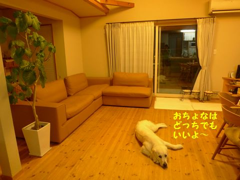 20110710-11_2R.jpg