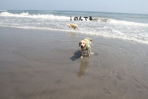 20110715-12_R.jpg
