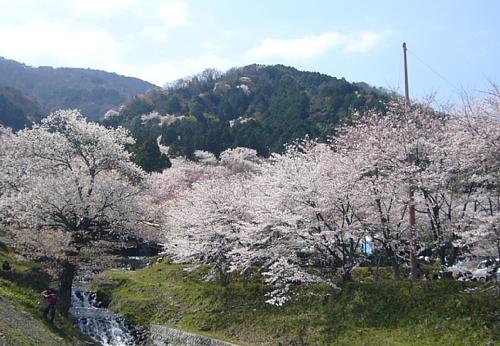 桜(100406)