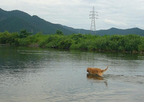 川の中へ(100812)