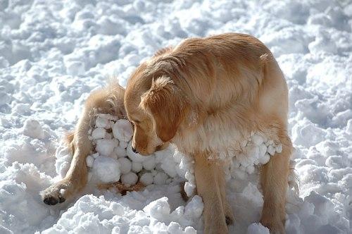 雪だるまがいっぱい・・・