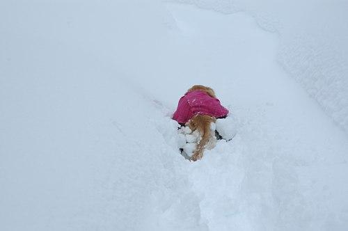 雪に埋もれて