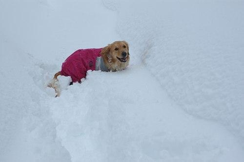 雪に埋もれて大変