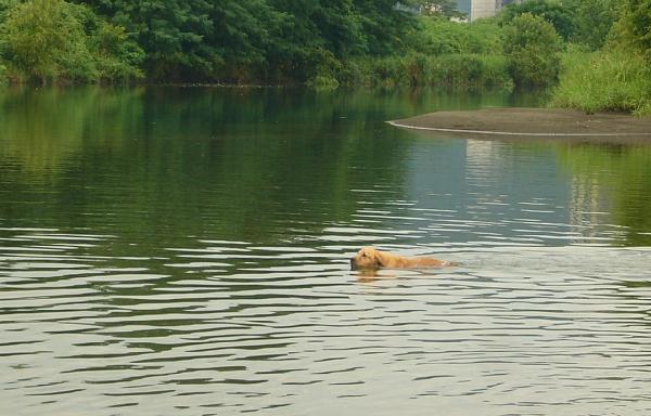 泳ぎます。(100812)